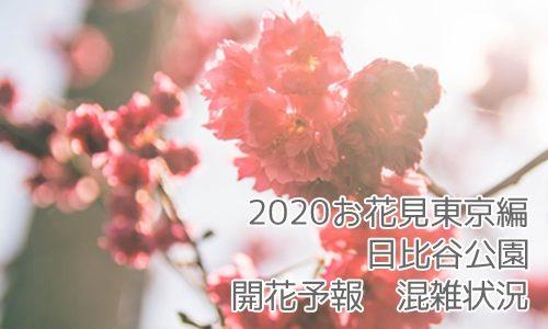 【2020お花見 東京編】日比谷公園の開花予報は?混雑状況と見どころ