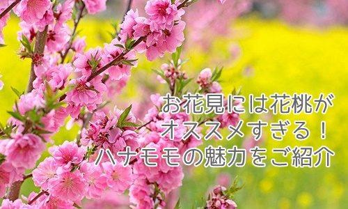お花見には花桃がオススメすぎる!ハナモモの魅力や名所もご紹介