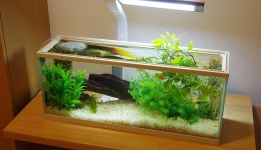 気がつくと苔だらけ!?な金魚の水槽‥簡単にきれいに保つ方法とは?