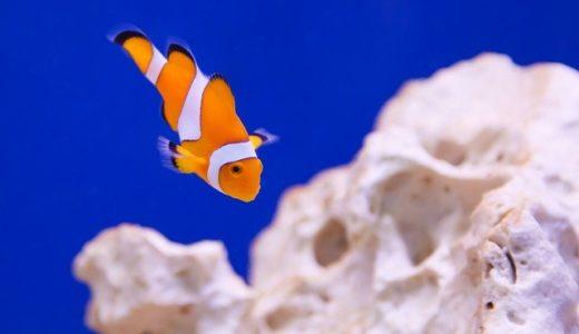 熱帯魚の飼育って正直大変?温度管理や餌やりの押さえるべきコツとは