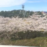 本荘公園桜花見 2021年の見頃や最新開花情報は?混雑、見所、駐車場