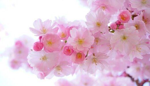 隅田公園の2021年桜花見の見頃や最新開花情報は?混雑を避けた見どころ、駐車場情報!